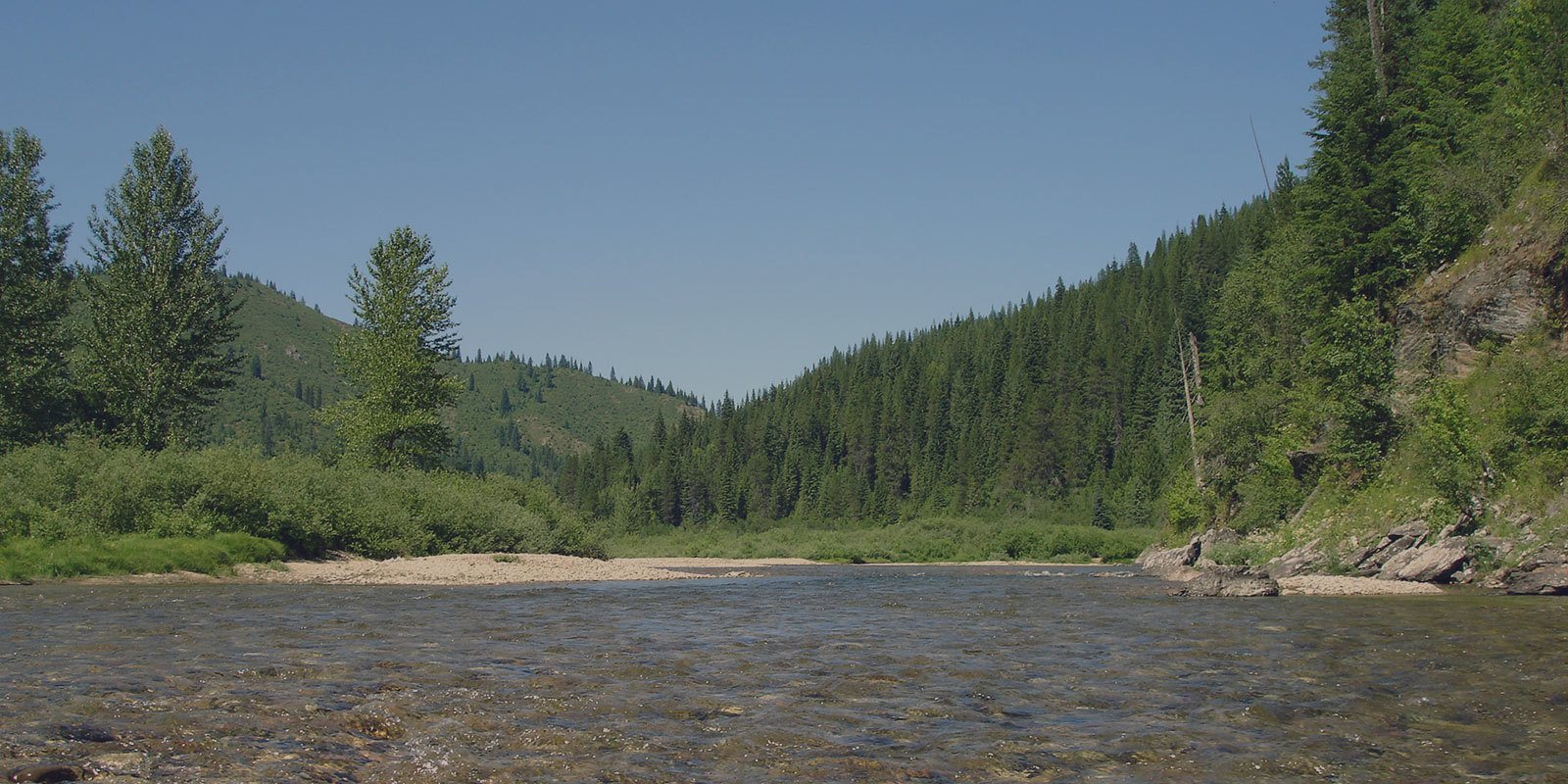 Protect Cayuse Creek and Kelly Creek from Logging